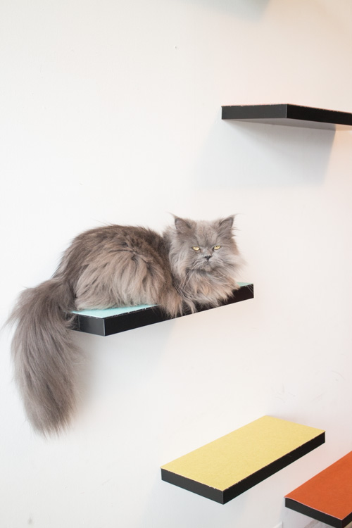 how to build cat shelves your cat will love! this is a easy atrodmu