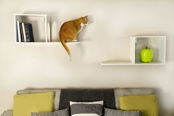 Collection cat shelves sophia wall mounted cat tree from designer pet products ockhjik