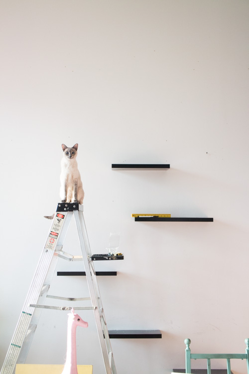 Cool how to build cat shelves your cat will love! this is a easy rakxdnk