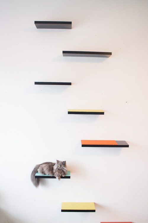 New how to build cat shelves your cat will love! this is a easy nrgbkpt