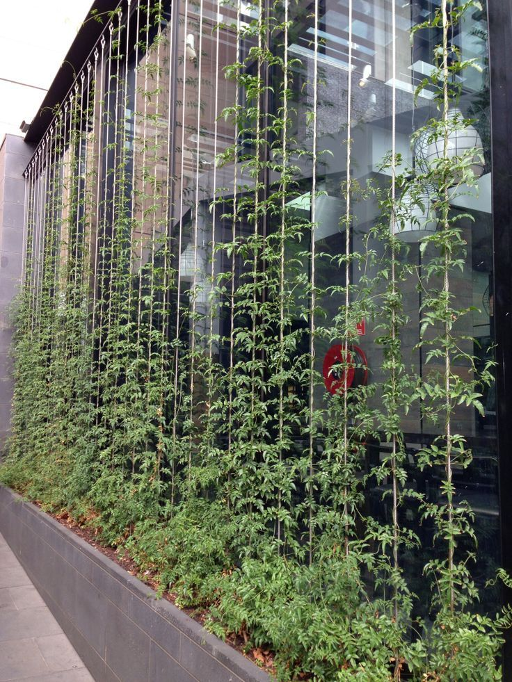 New vertical garden climbing on wires - jeanetteu0027s garden zfgsogj
